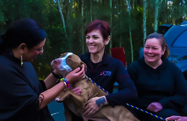 dog named denim being patted by journalist and held by animal shelter workers for story on over-breeding dogs